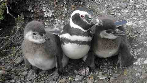 adopt a penguin - name YOUR penguin - as seen on BBC TV and